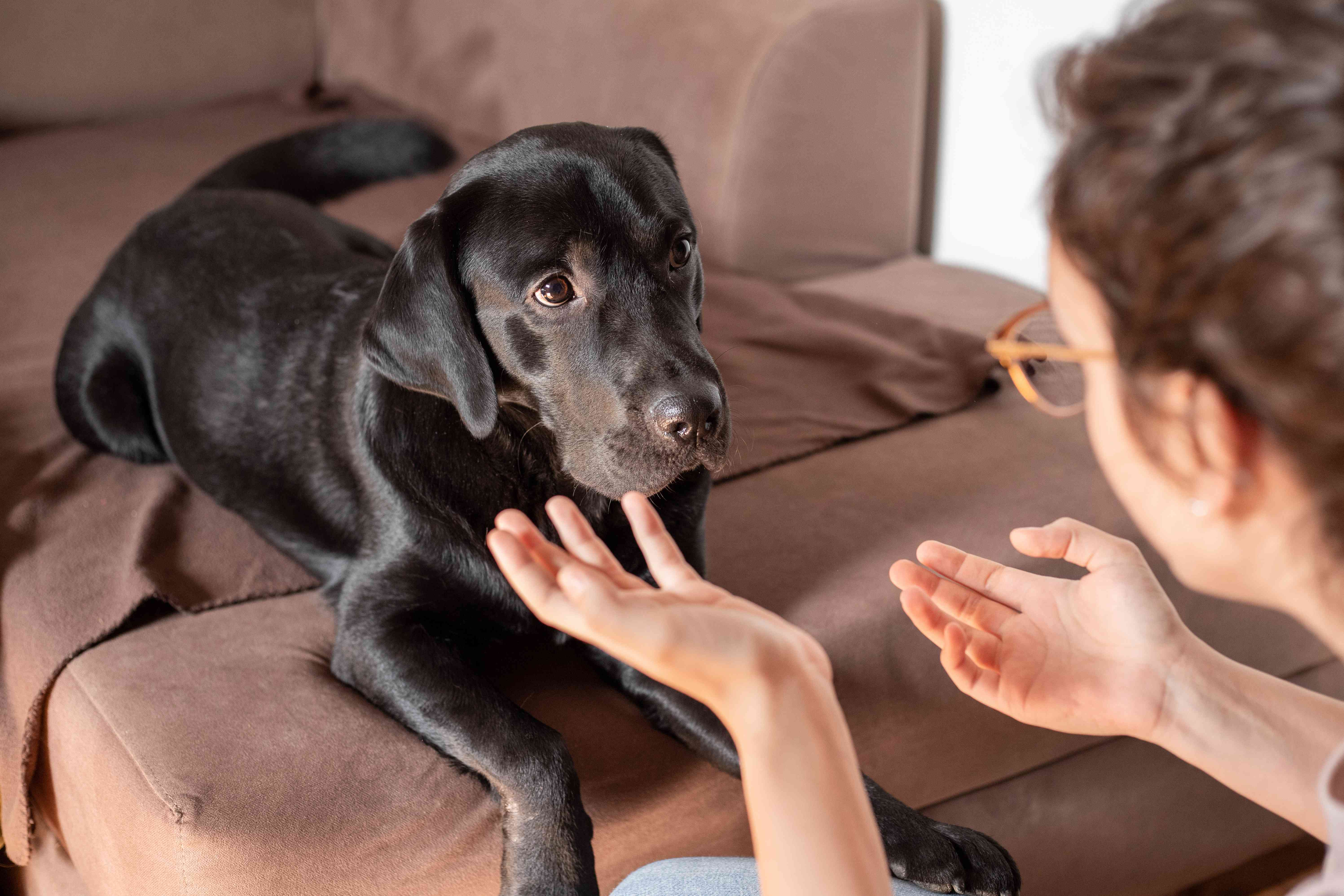 person talks to dog gesturing with hands while dog looks confused