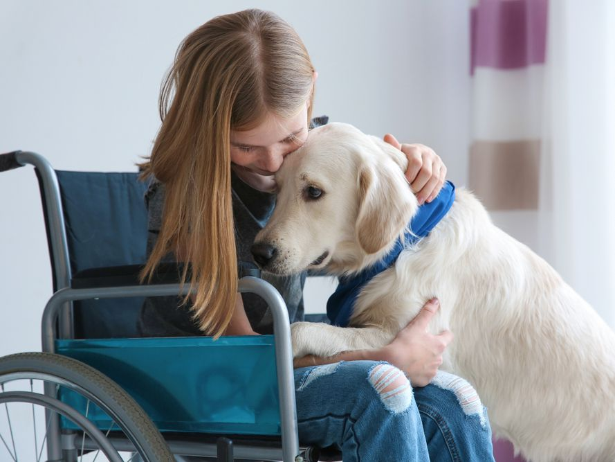 6 Lesser-Known Facts About Service Dogs