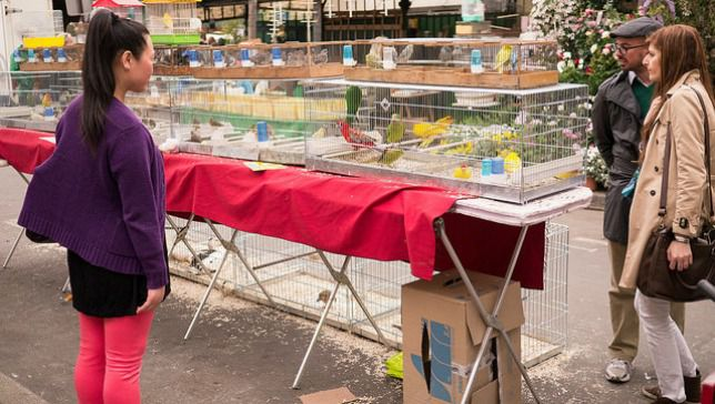 shoppers at paris bird market look at birds in cages