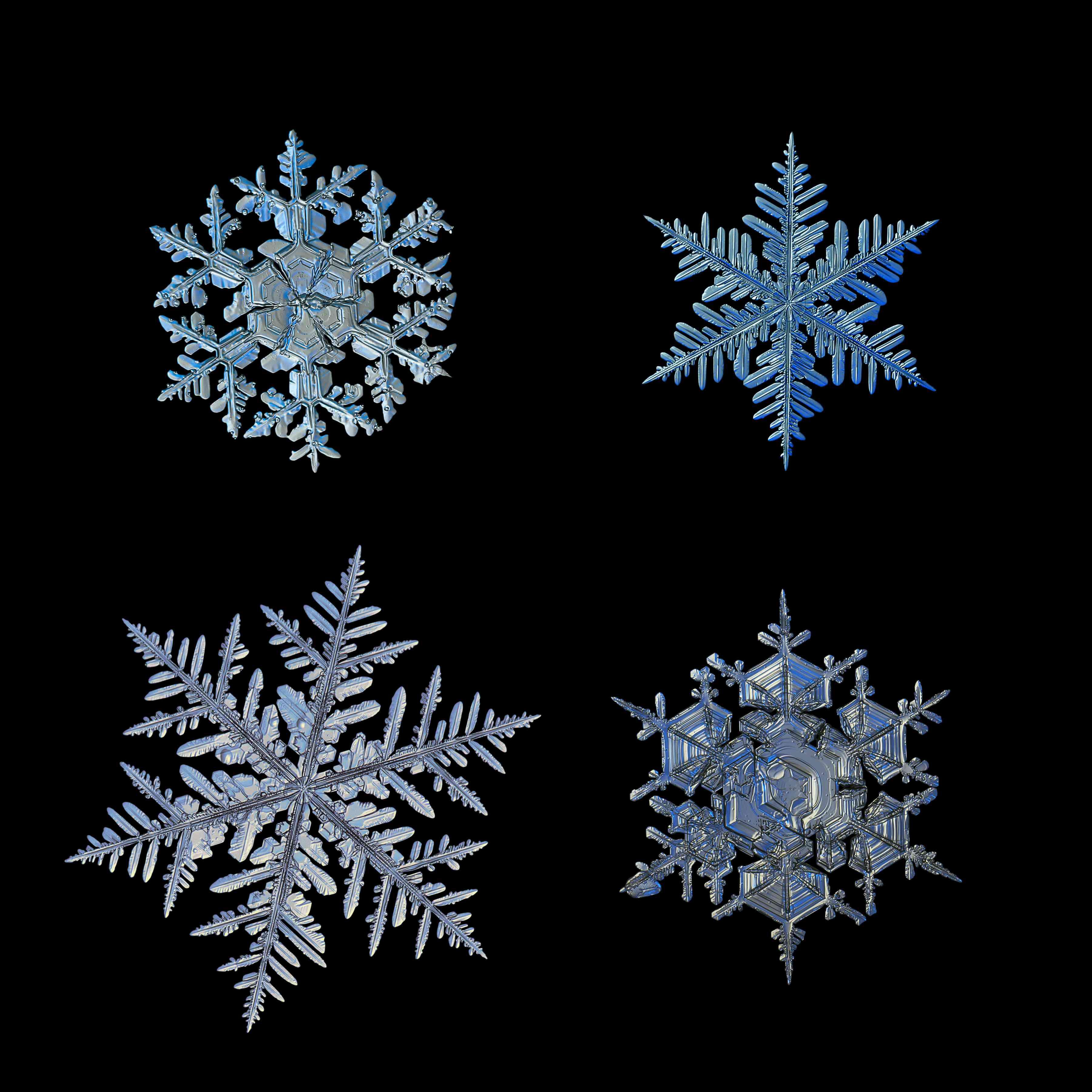 four macro snowflakes on black background