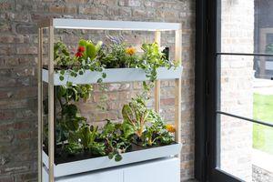 Rise Gardens unit