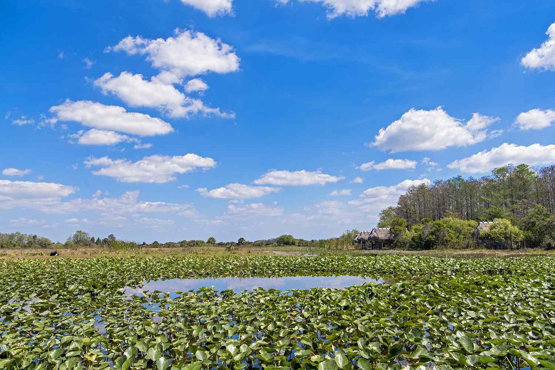 Landscape of the Everglades