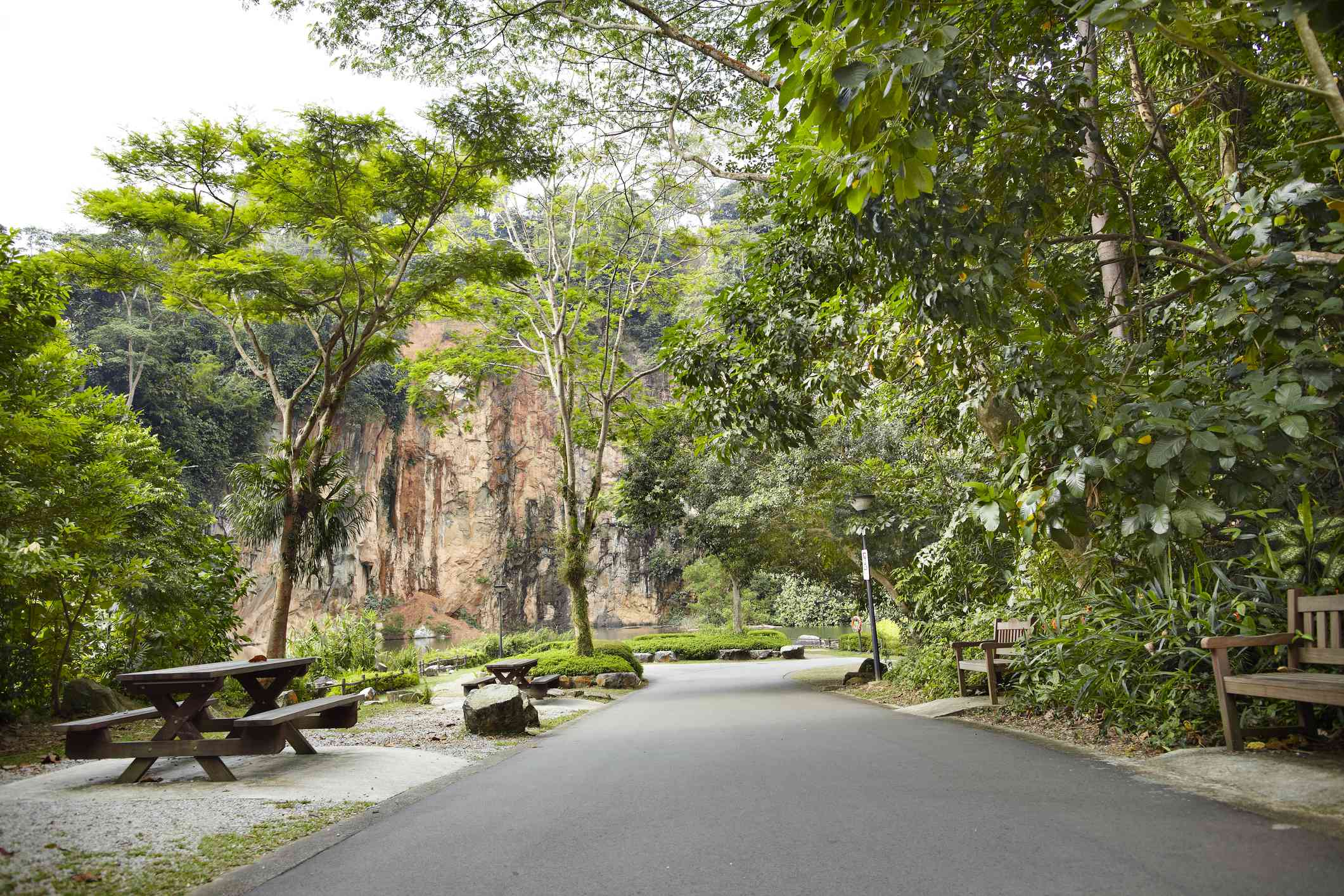 a path in Bukit Timah Nature Reserve with lush green trees and a brown picnic table