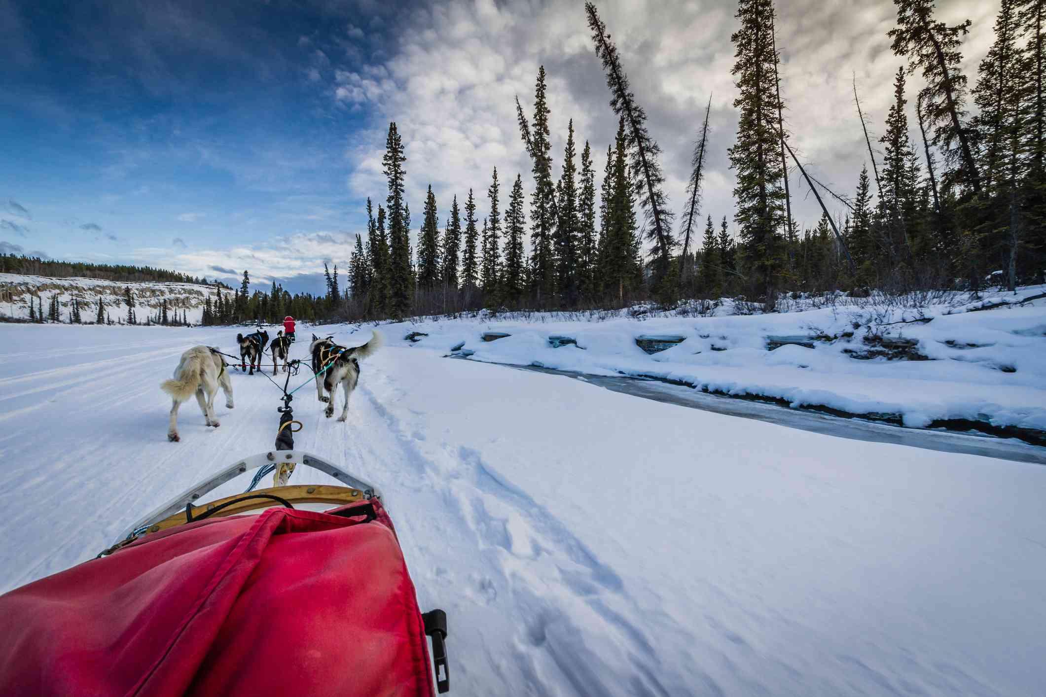 Dog sled team travelling through winter landscape, Yukon, Canada