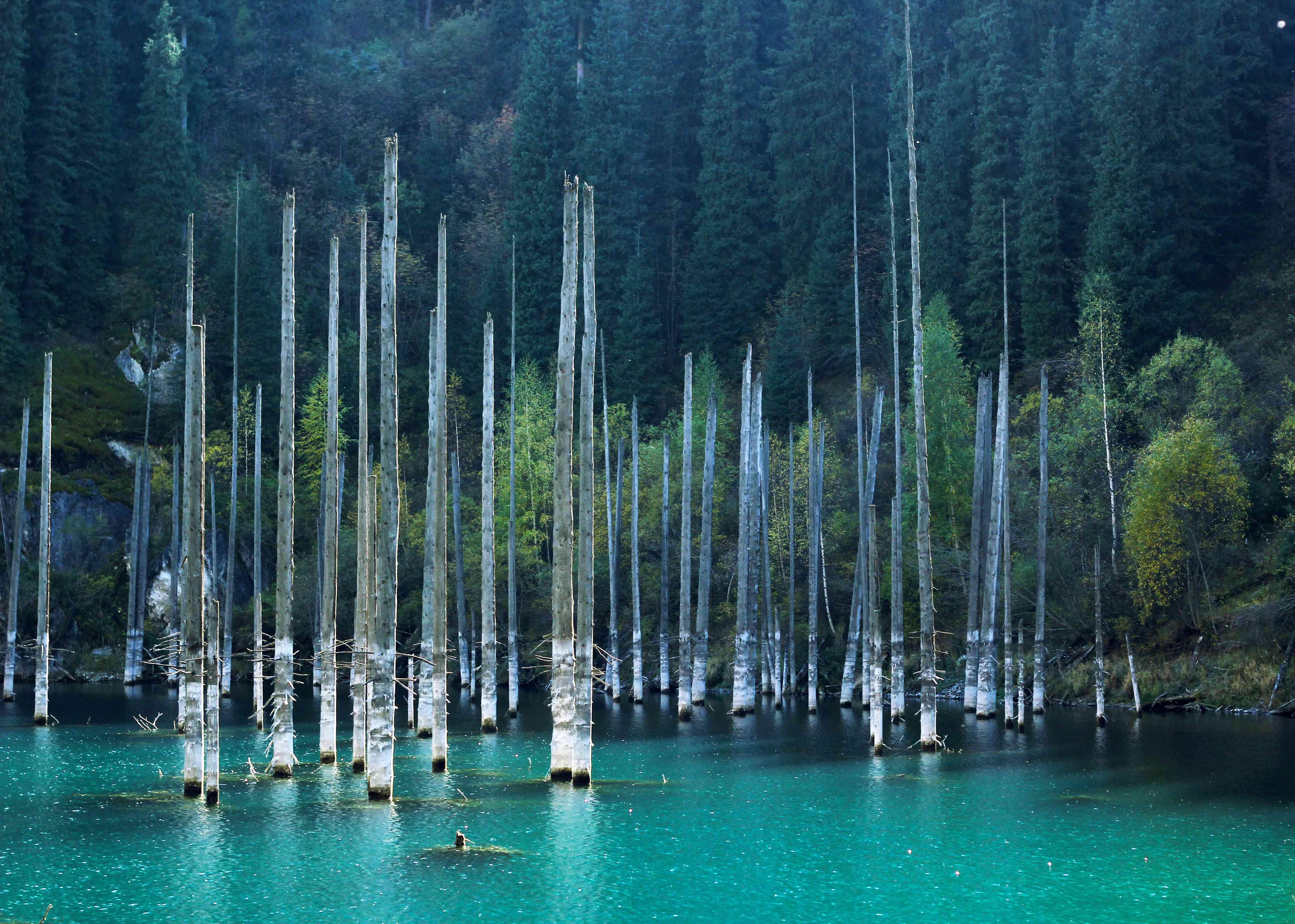 Sunken birch trees in the vividly blue Kaindy Lake