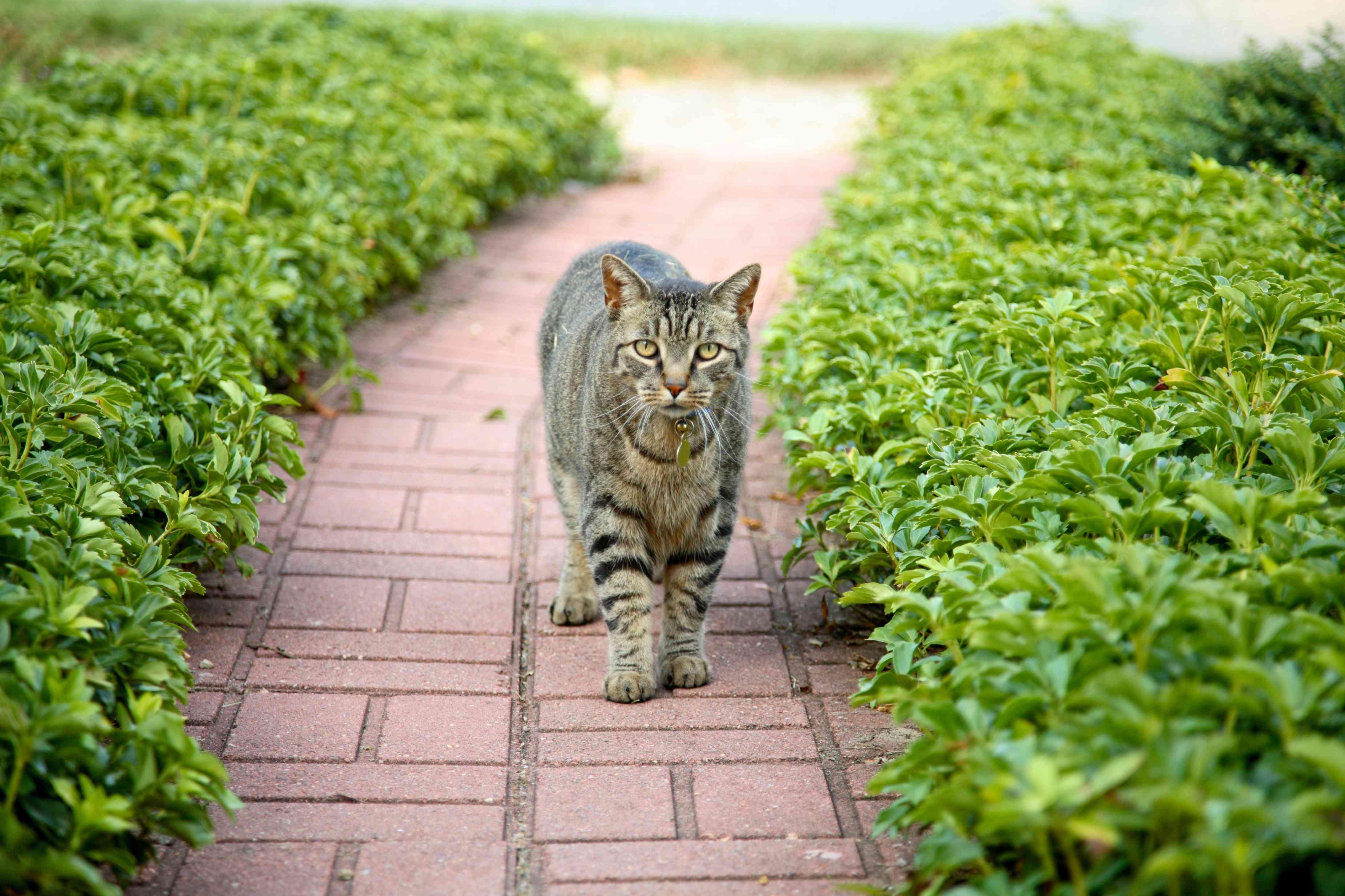 cat on sidewalk