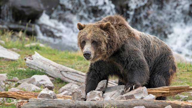 Los osos necesitan spray para osos, pero ¿cómo reciclarlo?