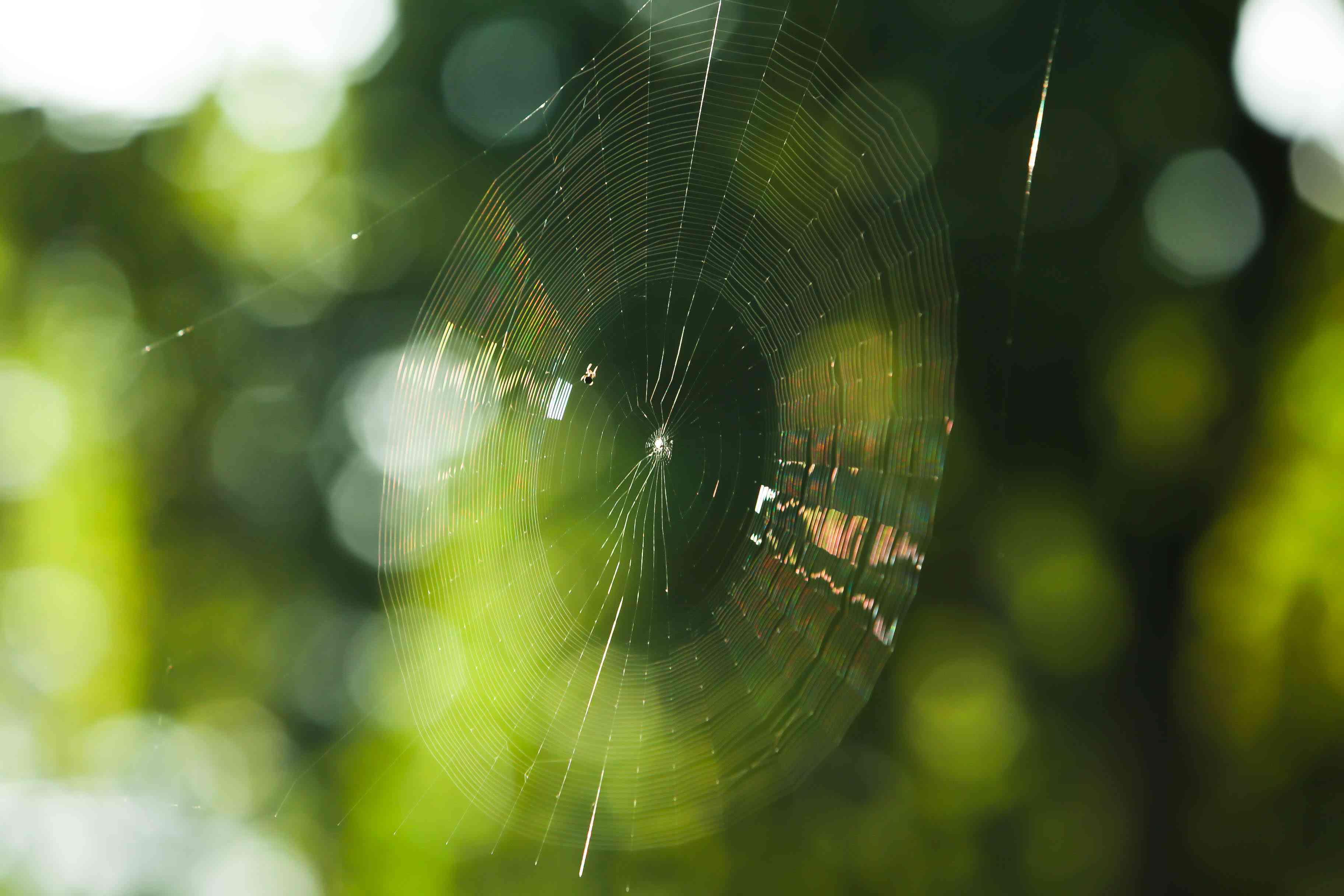 spider web shimmering in sunlight