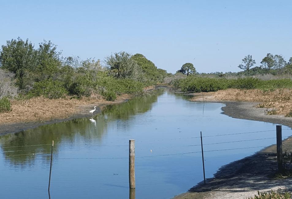 Pond at Babcock Ranch, Punta Gorda, Florida