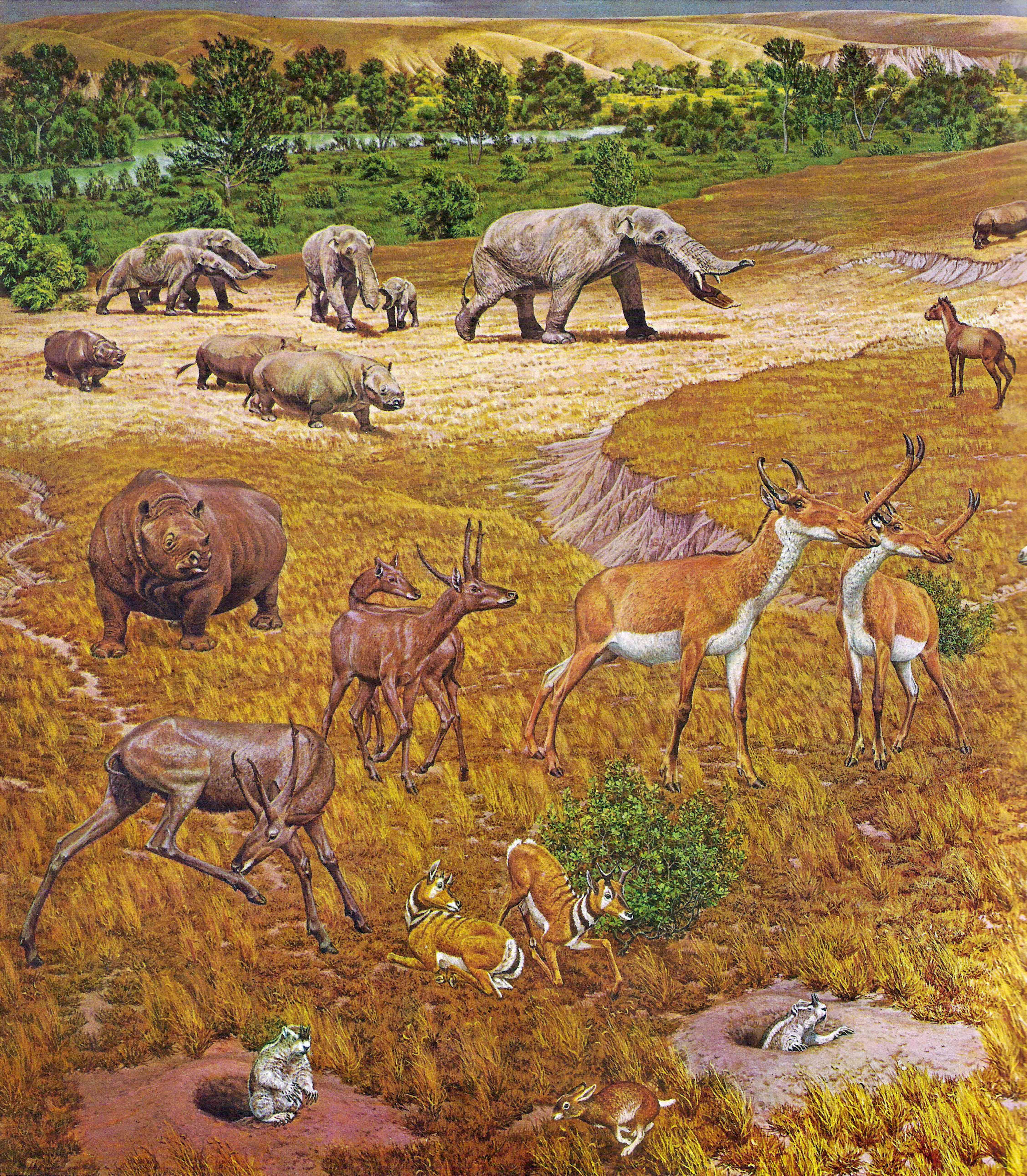Pliocene fauna of North America, from a 1964 mural made for the Smithsonian Museum