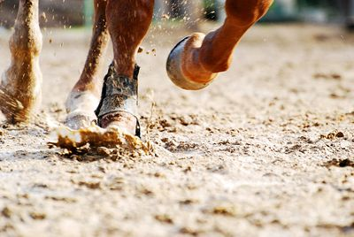 Close up of horse hooves while running.