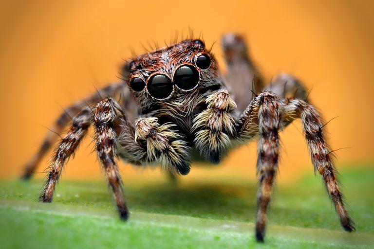 ¿Y si todas las arañas desaparecieran?