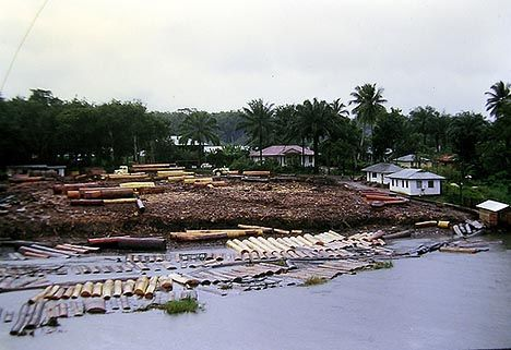 nigeria logging photo