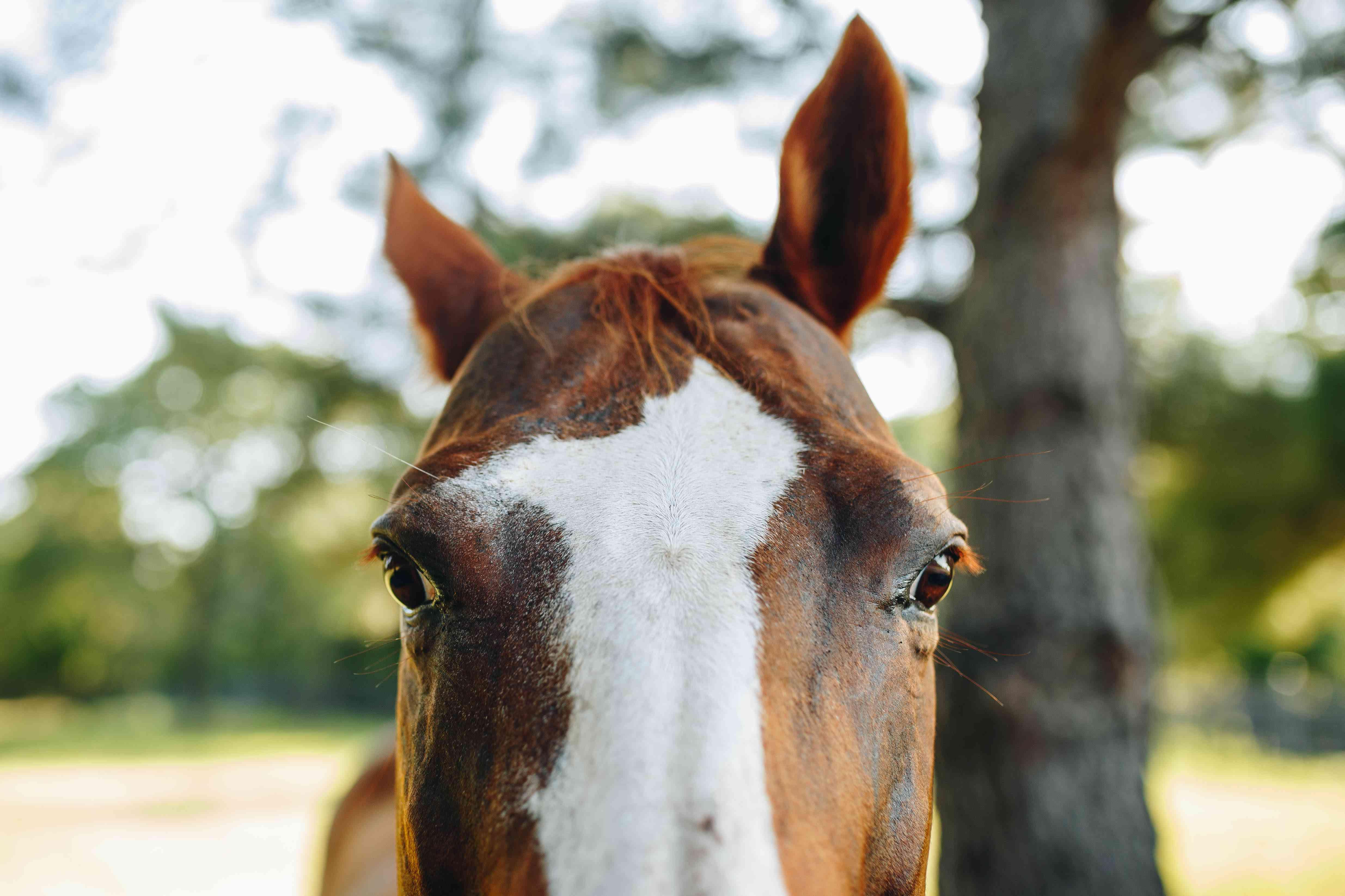 closeup shot of horse eyes