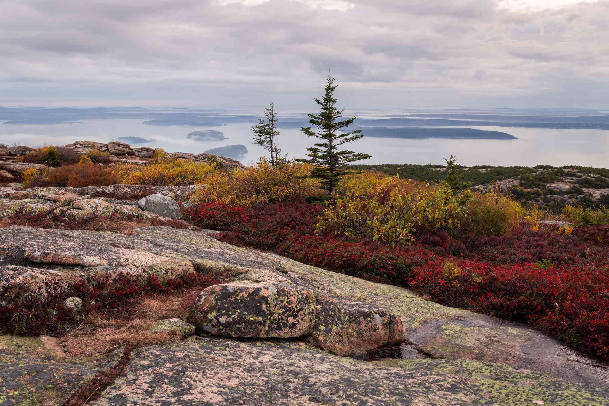 Autumn foliage on Cadillac Mountain with view of the bay