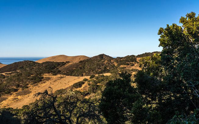 Rolling hills and trees in the Jack and Laura Dangermond Preserve