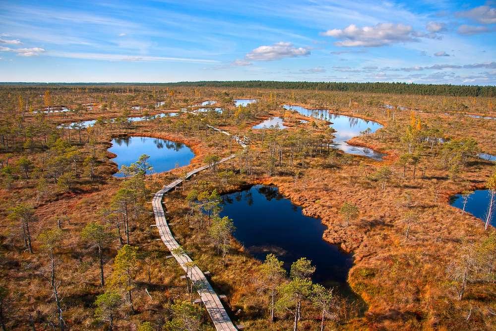 A peat bog in Latvia's Kemeri National Park.