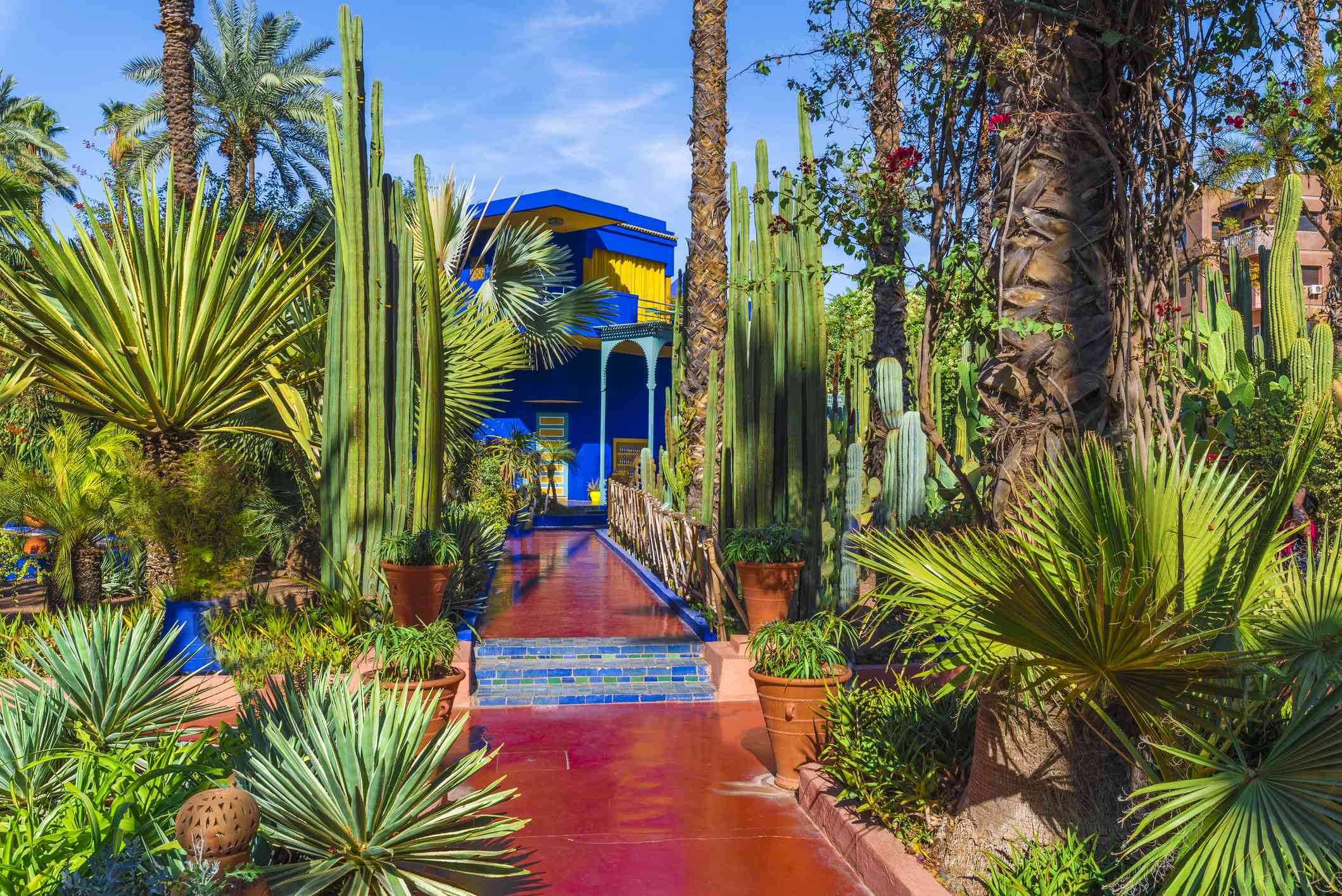 Tropical garden at Le Jardin Majorelle with blue building, red pathway, and cacti