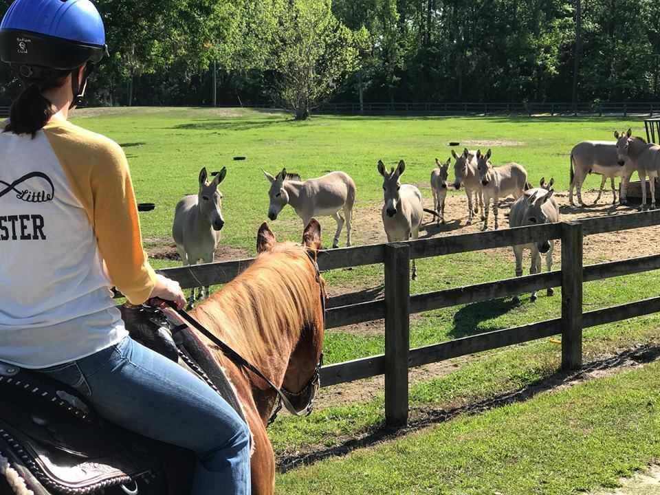 safari from the saddle