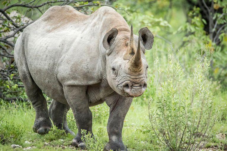 Namibia: Historia de éxito de la conservación en África