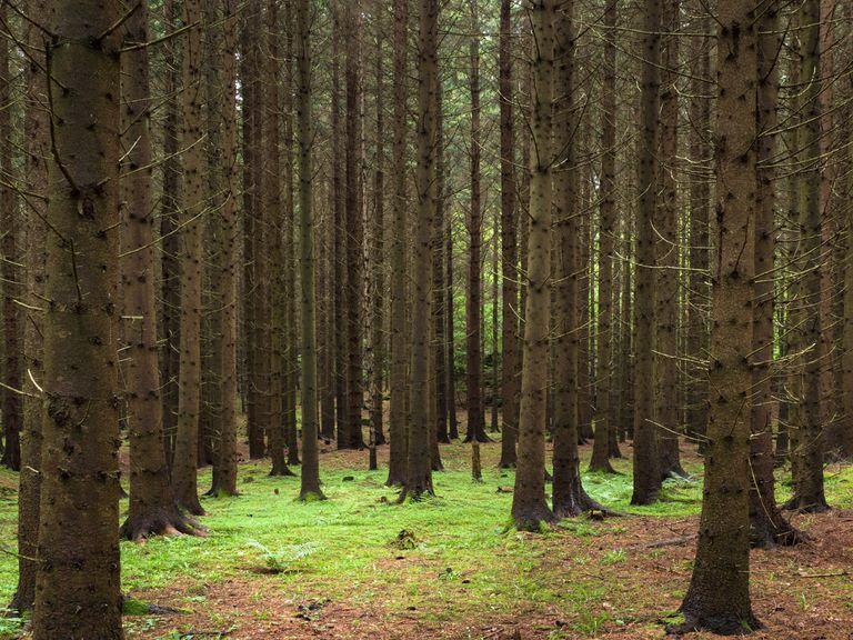 La futura biblioteca del artista conserva árboles para el libro que se imprimirá en el año 2114