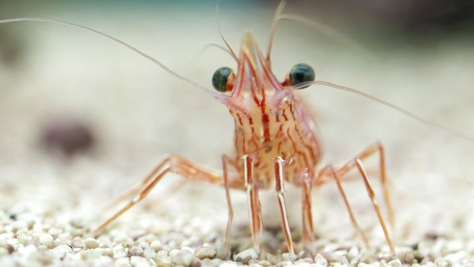 Why It S A Good Idea To Stop Eating Shrimp
