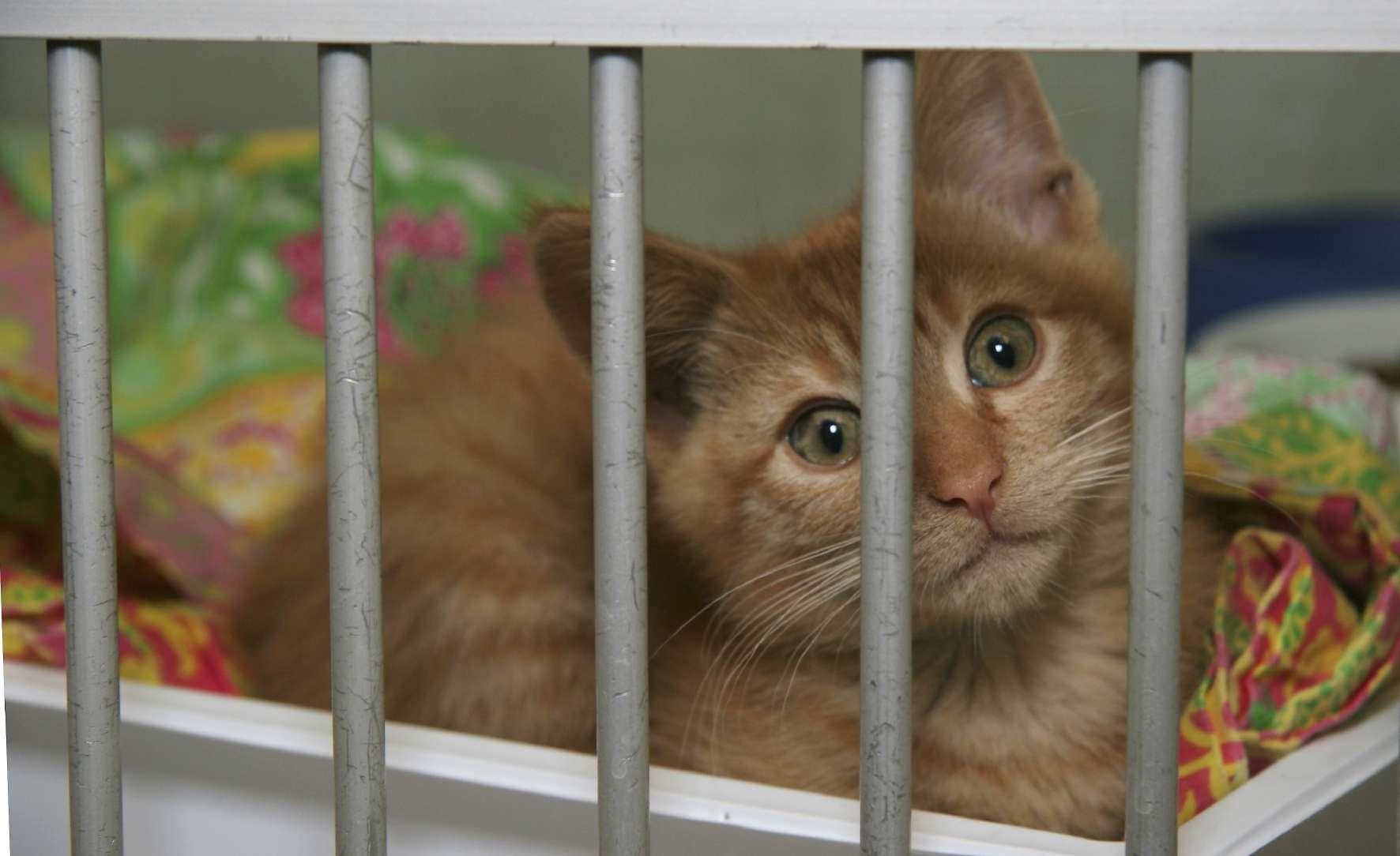 orange kitten in shelter