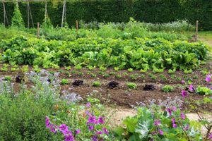 Big backyard vegetable garden