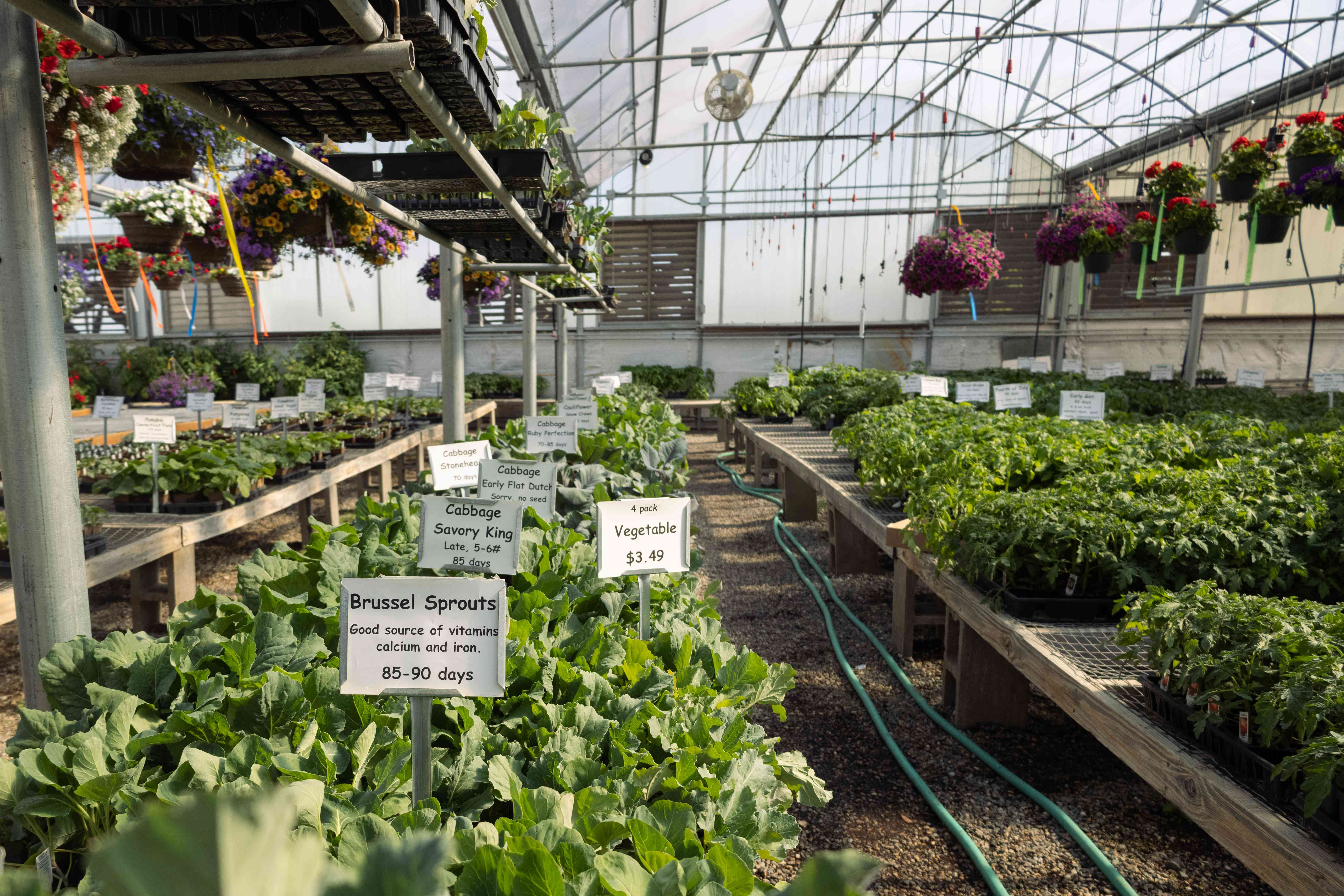 large open-air greenhouse with variety of hanging plants and edible starter plants for sale