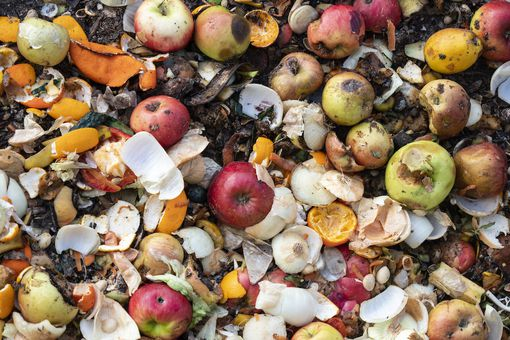 Dump of organic garbages with remains of fruits and bread in decomposition