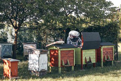 Beekeeper working in apiary.