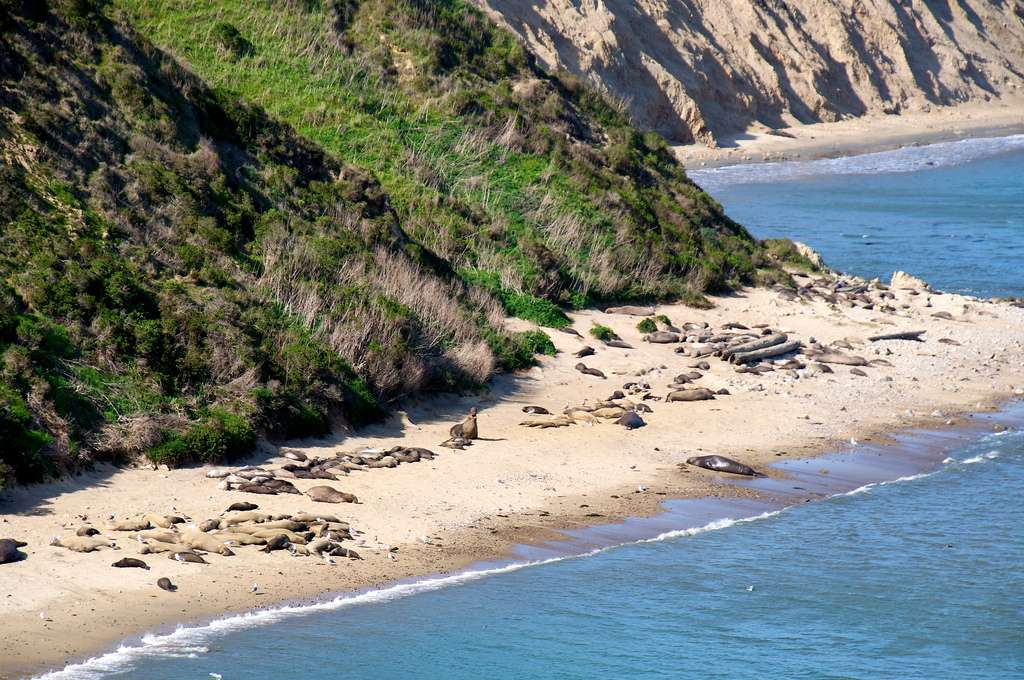 Chimney Beach and elephant seals, Point Reyes