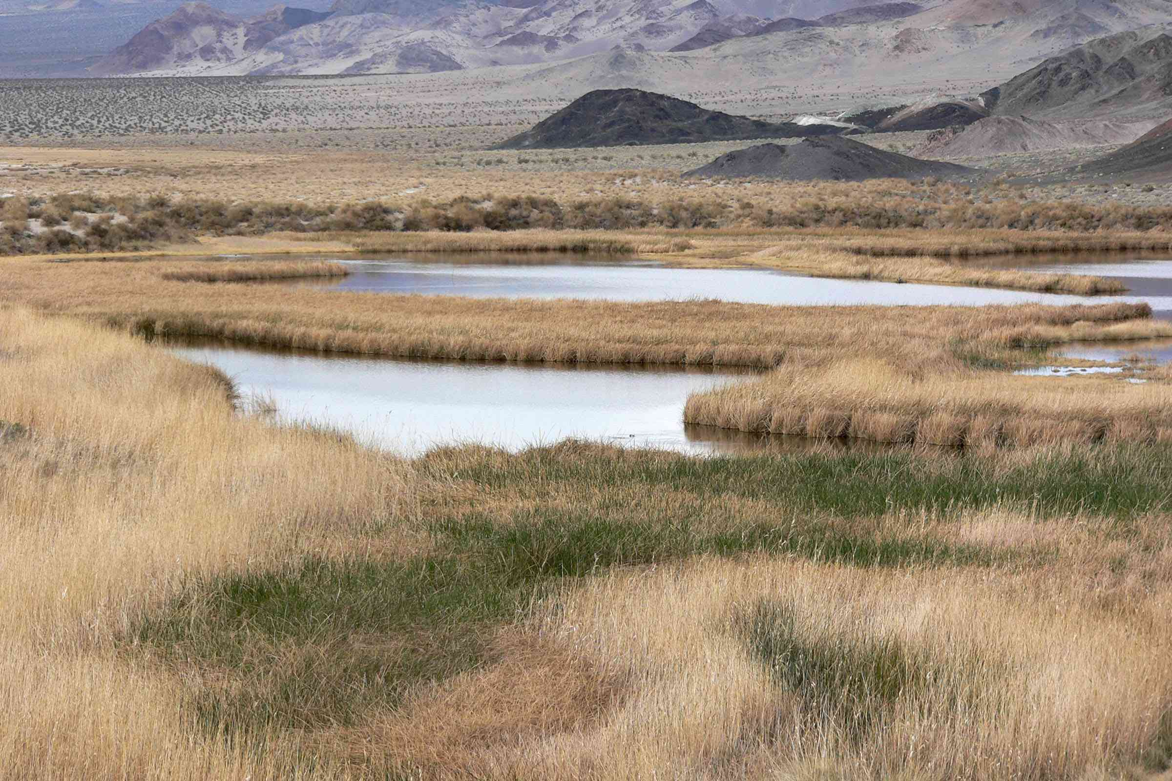 Saratoga Spring surrounded by the mountains and flat grasslands of Death Valley