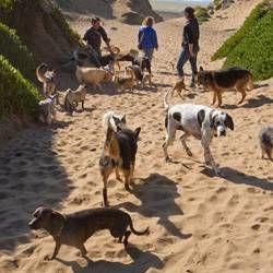 San Francisco Fort Funston dogs