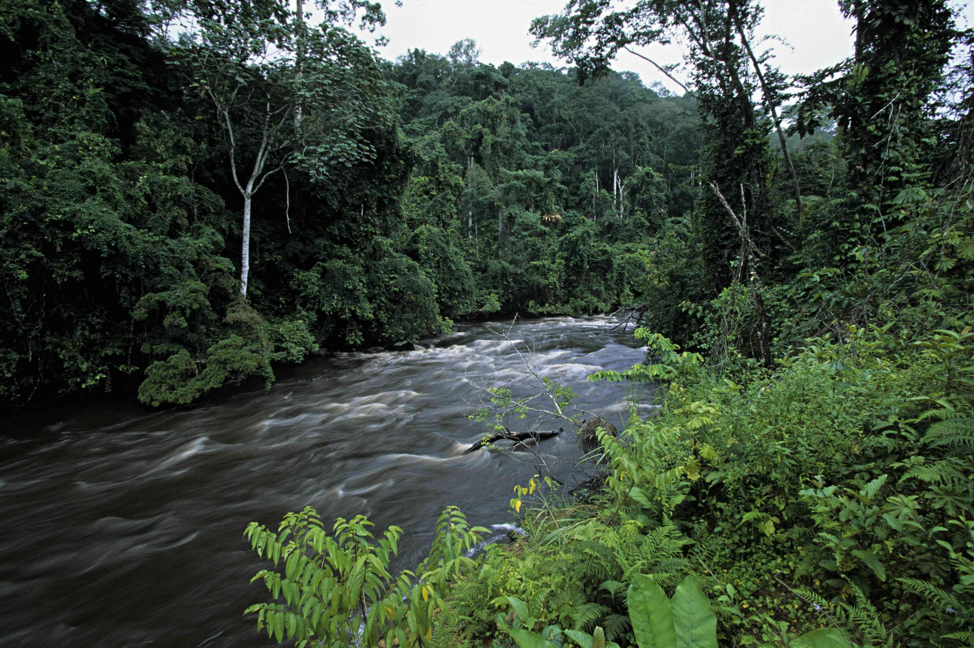 Tropical rainforest surrounding river in Gabon, Africa