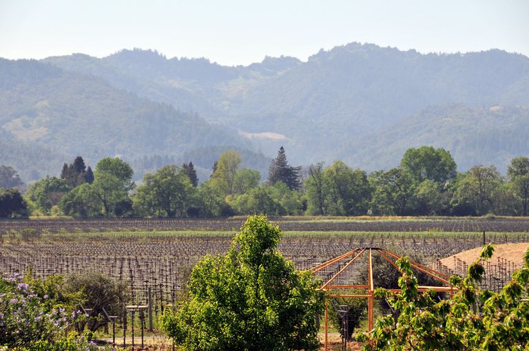 The Frog's Leaf Winery vineyard.