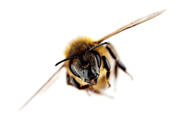 Cómo es una tienda de comestibles sin abejas