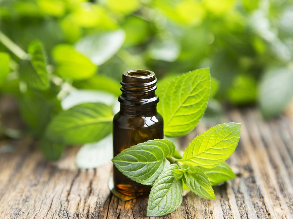 mint leaves and peppermint oil pictured which can be an effective ant repellant