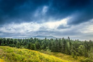 boreal forest in Canada