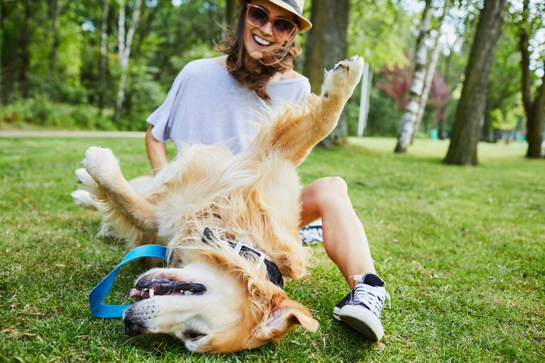 A dog rolled over on its back on green grass, being petted by a smiling young woman