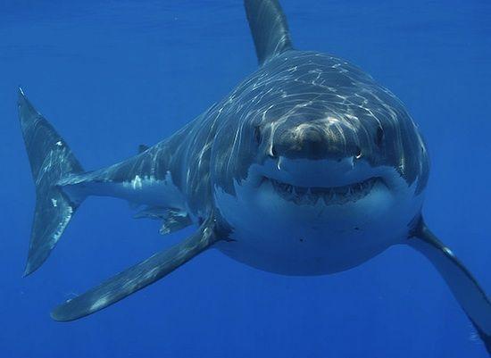 sharks like ac dc photo
