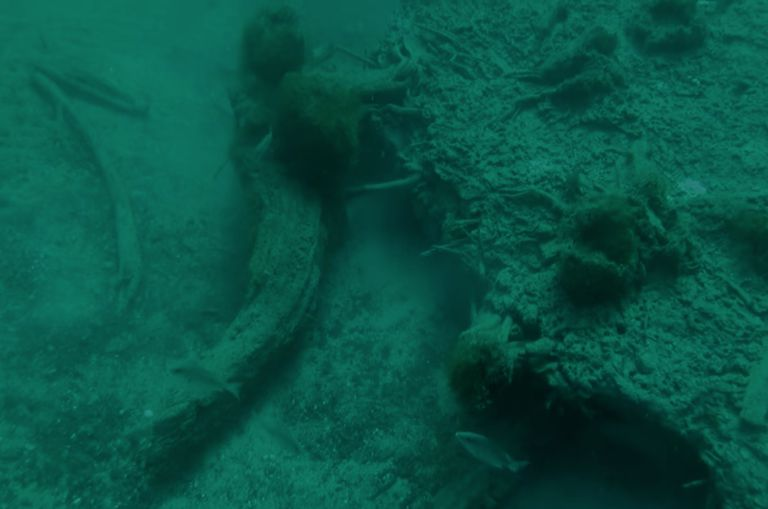 Pieces of ancient underwater forest in water