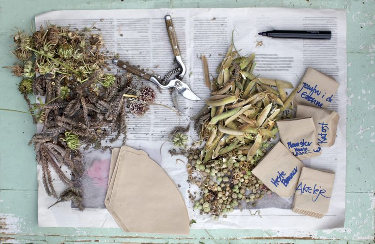collecting flower seeds
