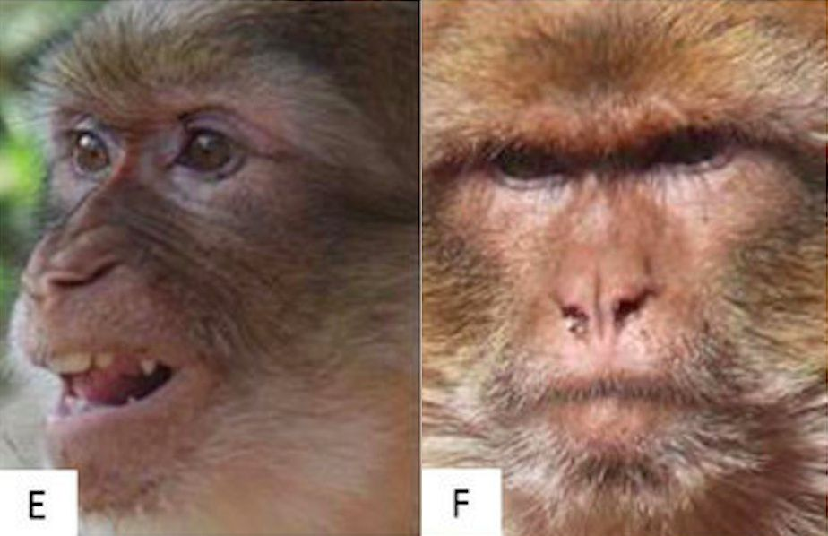 two different monkey facial expressions