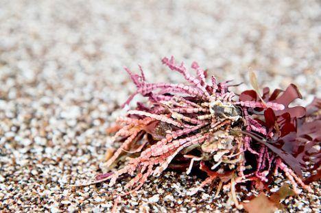 sea weed photo