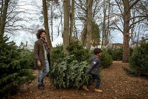 taking a Christmas tree home