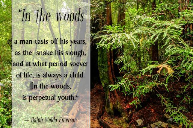 In the woods too, a man casts off his years, as the snake his slough, and at what period soever of life, is always a child. In the woods, is perpetual youth. Ralph Waldo Emerson,