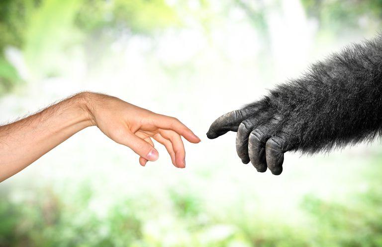 Por qué muchos científicos no confían en la psicología evolutiva