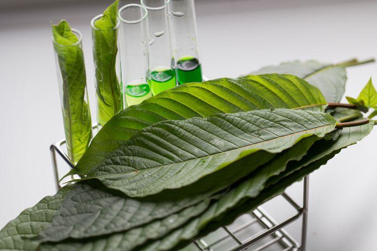 Los científicos pueden haber encontrado el mejor conservante de alimentos, y está completamente basado en plantas
