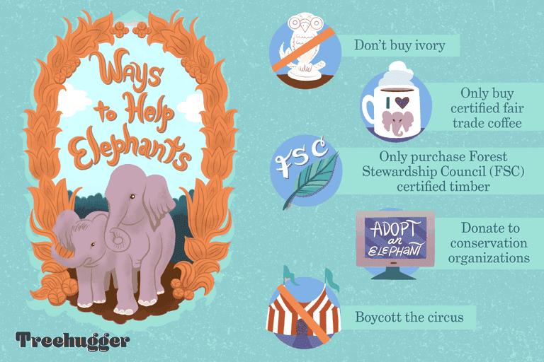 ways to help elephants